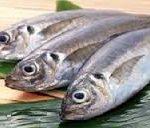 ماهی پرورشی