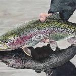 ماهی پرورشی قزل آلا شمال