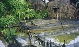 ماهی پرورشی درجه یک