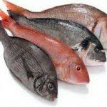 ماهی حلوا قرمز
