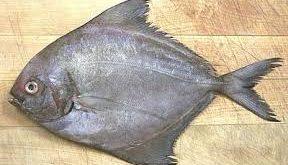 ماهی حلوا